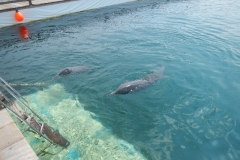 Dolphin show - 04