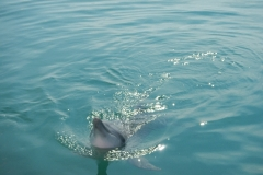 Dolphin show - 05