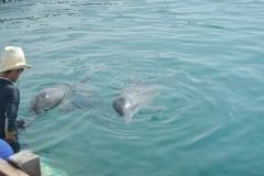 Dolphin show - 06