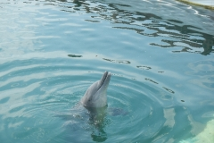 Dolphin show - 08