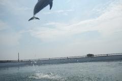 Dolphin show - 10