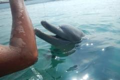 Dolphin show - 11