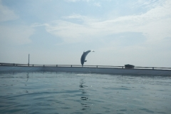 Dolphin show - 12