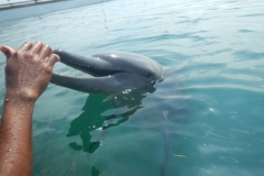 Dolphin show - 13