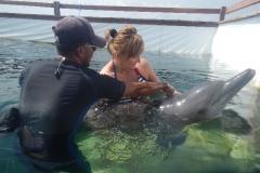 Dolphin show - 19