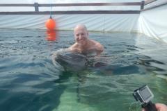 Dolphin show - 24