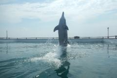 Dolphin show - 27