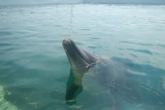Dolphin show - 28