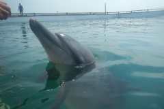 Dolphin show - 30