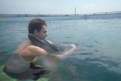 Dolphin show - 41