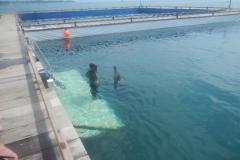Dolphin show - 45