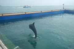 Dolphin show - 48