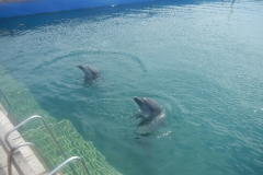 Dolphin show - 50