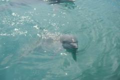 Dolphin show - 51