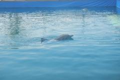 Dolphin show - 58