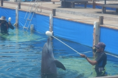 Dolphin show - 60