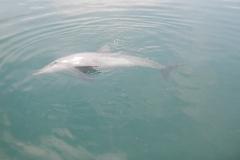 Dolphin show - 64
