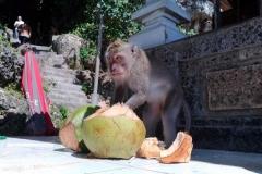Bali 2017.08.10 - 23