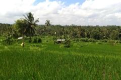 Bali 2017.08.21 - 45