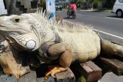 Bali 2017.08.22 - 55